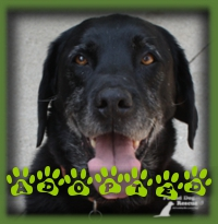 Being older didn′t hold Archie back from finding his forever home! He′s living in Baden and is a happy boy.