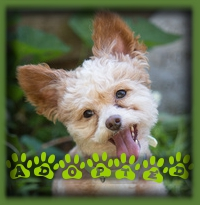 Little Prince couldn′t have found a better forever home. Previous adoptees of Daisy and Rosie, the darling poodles, fell for Prince and knew it was meant to be. He′s got everything he wants, loving caregivers, kids and little dog buddies!