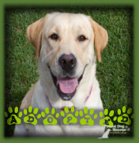 Sadie found her forever home in Ayr. She′s got a huge yard with kids and dog friends to play with! Sadie′s in heaven.