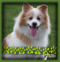 Happy is now living in Markham with a lovely couple and their 12yr old daughter.
