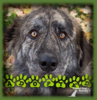Bear found his perfect forever family in Kitchener. He has many family and friends eagerly awaiting his arrival.