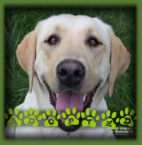 Marilyn has found her forever home in Exeter with a family of Lab lovers!