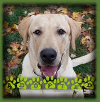 Cooper found his forever family in Oakville. He will have access to a cottage and swimming which is perfect for him.