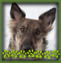 Layla found a great home up north in Port Syndey with a couple who can provide her the companionship she requires along with a whole lot of love.
