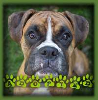 Jasmine found a wonderful couple in Hamilton who were looking for a young and friendly Boxer to call their very own. Jasmine was the perfect fit! She will get all the exercise and love she needs to be a happy girl!