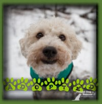 Buttons found his forever home with a retired couple in Thornhill who were looking a long time for the perfect dog for their home. They found Buttons and knew he was the one. He will get to spend this Christmas in a loving forever home...best gift ever!!