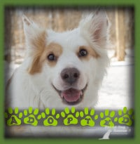 Kodak found the most perfect forever home with a couple in Kitchener who loved his laid back style and general good nature. They weren′t concerned at all that he had a medical condition and have already had him to the vet for a check up...all good!