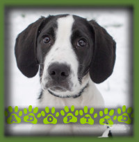 Pete found a forever home for the holidays! We had a wonderful family looking for a goofy sibling for their goofy Doodle and theres not much goofier than a Hound puppy. It was a perfect personality and energy match and the dogs became fast friends. Pete is greatly loved by his new family.
