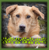 Rogen found his forever home in Brantford who had applied looking for a dog that she can work advanced obedience and agility with. Rogen is a young Shep/Collie/Retriever and fit what she was looking for. He is settling in well and would be even happier if he could convince his new cat siblings to play with him! For now playing with his new mom will have to do
