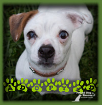 Sweetie found her ideal home in Nithburg with a couple who were looking for a loving senior dog to join their family. Sweetie was everything they were looking for and then some. She is named Dobby now and shares her home with a cat.