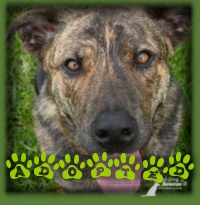 Mack has a new dad and is happily living in his forever home in Baden.